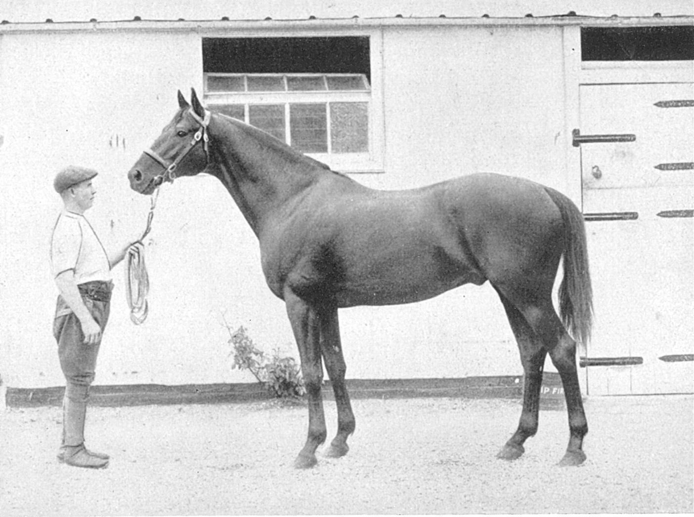 Знаменитый скаковой жеребец Дарк Рональд, род. 1905